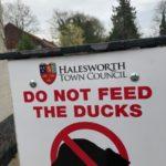 Halesworth Ducks