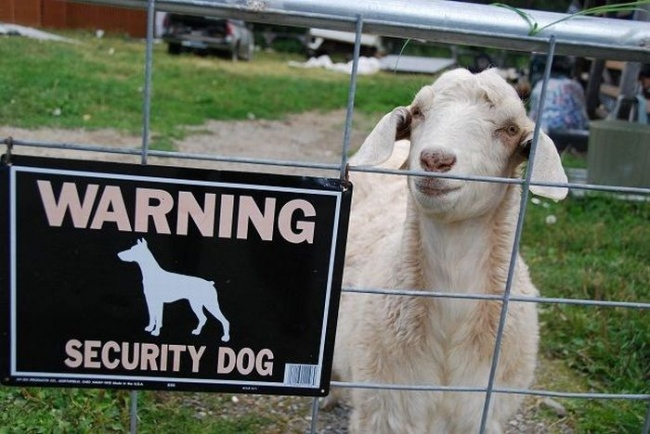 Security Levels Raised