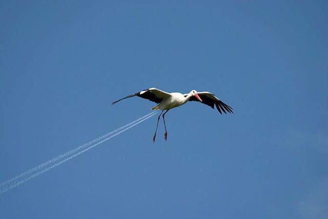 NEVER let storks eat vindaloo!