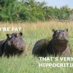 Hippocritical!! Haha! 😀