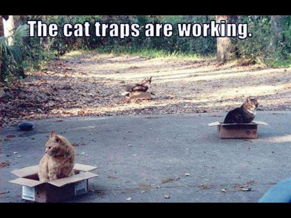 The cat traps are working! 🙂
