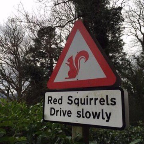 I bet they do! Surprised they can reach the pedals! 😀