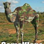 What camel? 😀