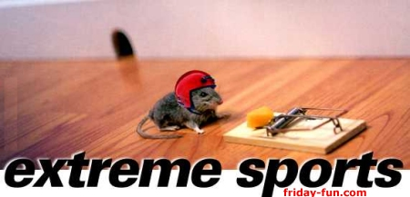 Mouse extreme sports