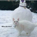 """Cats of the UK protesting over latest """"snowpet"""" trend 😀"""
