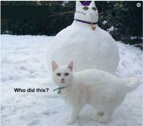 "Cats of the UK protesting over latest ""snowpet"" trend 😀"