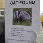 Have you lost your cat?