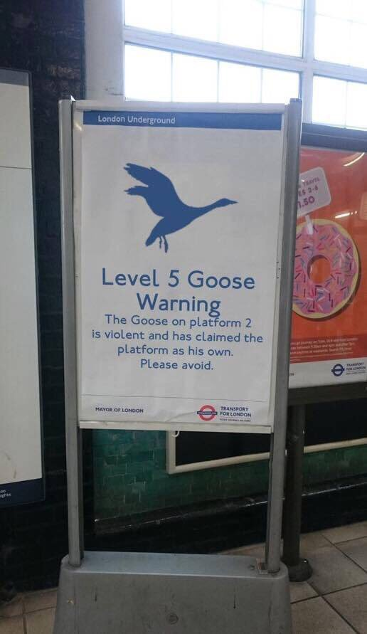 Meanwhile in London, up to Level 5 Goose Warning! 😀