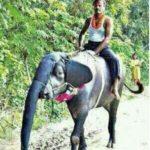 World Elephant Day 😀
