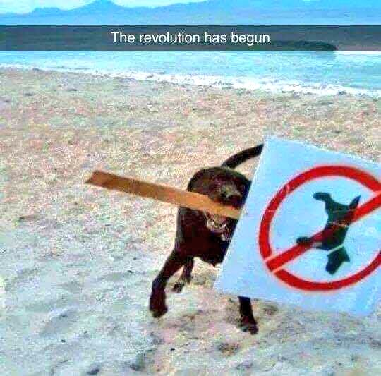 Sod the rules! 😀