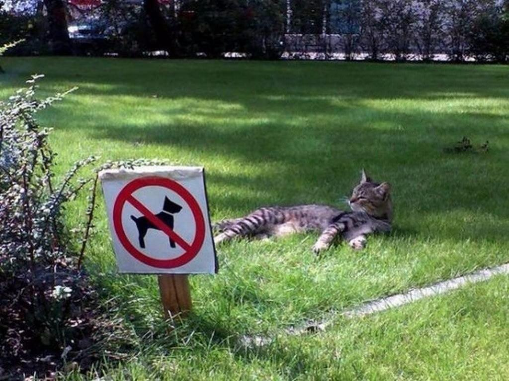 Sod the rules! I'm a bloody cat!😀