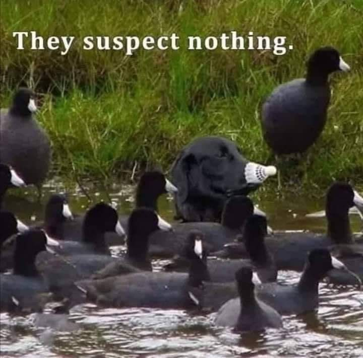 They suspect nothing! 😀