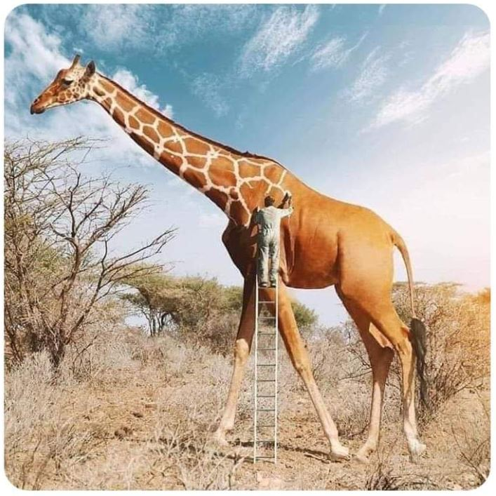 I never realised how hard it was to paint a giraffe! 😀