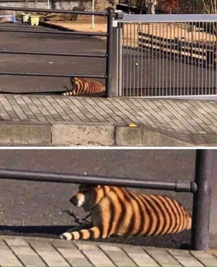 Thought I saw a TIGER in the car park earlier! 😀