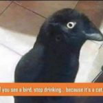 Alcohol test: Do you see a bird or the cat?