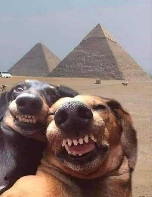 Dogs don't get the virus, so are free to travel! 😀