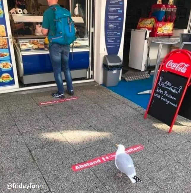 Meanwhile in Plymouth, even the killer seagulls comply! 😀