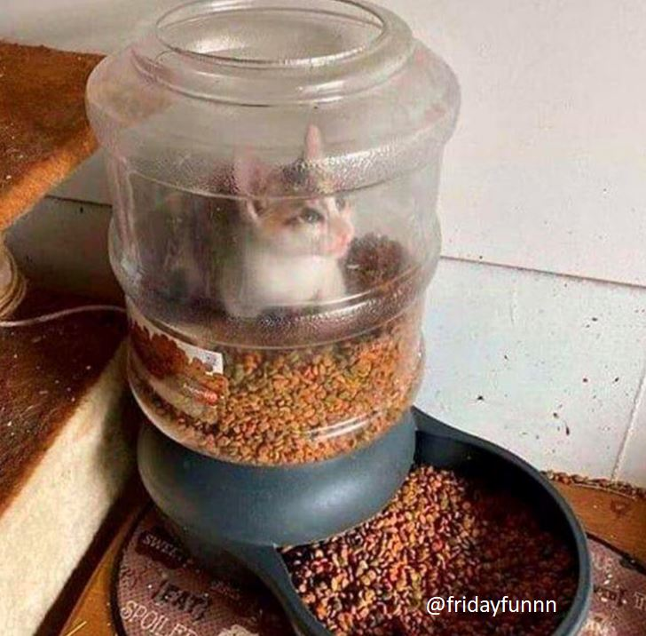 Not being a cat owner I'm not sure how this works? 😀
