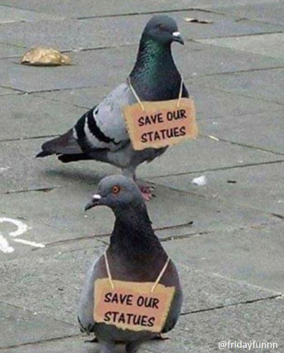 Pigeons organise more mass protests! 😀