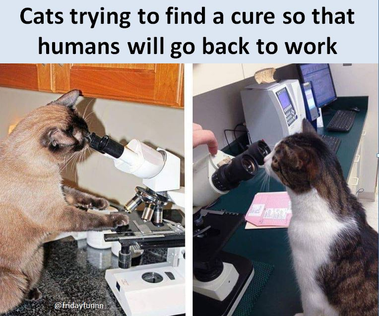 Can you imagine cats doing this? Yeah, me too! 🐱