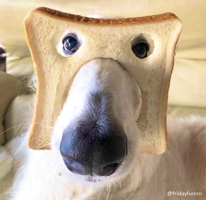 Anyone know what bread of dog this is? 😀
