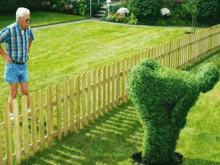 When 'love thy neighbour' goes wrong! 😆