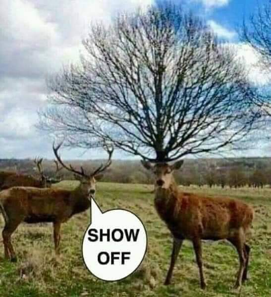 Meanwhile in the natural world! 😃