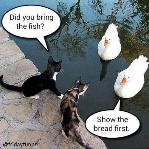 Meanwhile down at the pond! 😀