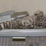 Is that a Copy Cat or a Cat Scan?