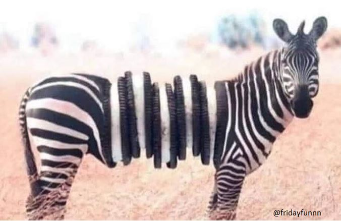 How a lion sees a zebra! 😀