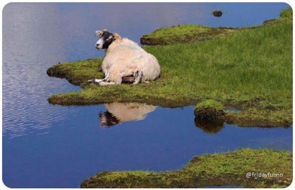Giant sheep destroys most of West Wales! 😀