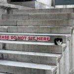 Are there ANY rules that cats follow? 😀