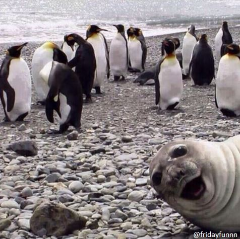 Is this the best photobomb ever? 😀