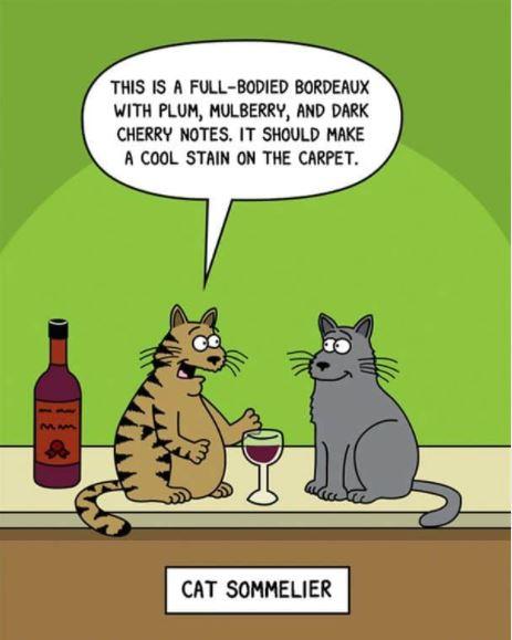Happy Caturday! 🙂